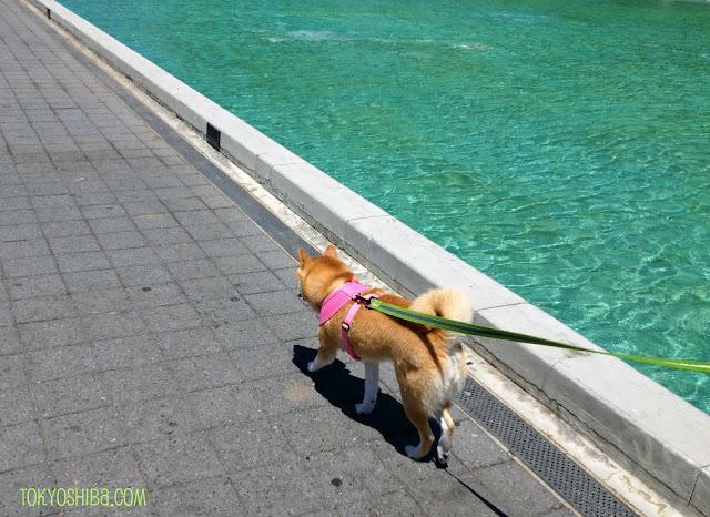 Soft Dog Harness Australia