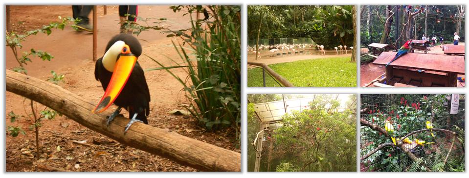 Parque das Aves - A História da Gaby