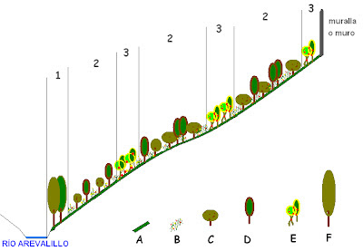 Arevaceos por unas cuestas m s bellas for Diferencia entre arboles de hoja caduca y hoja perenne