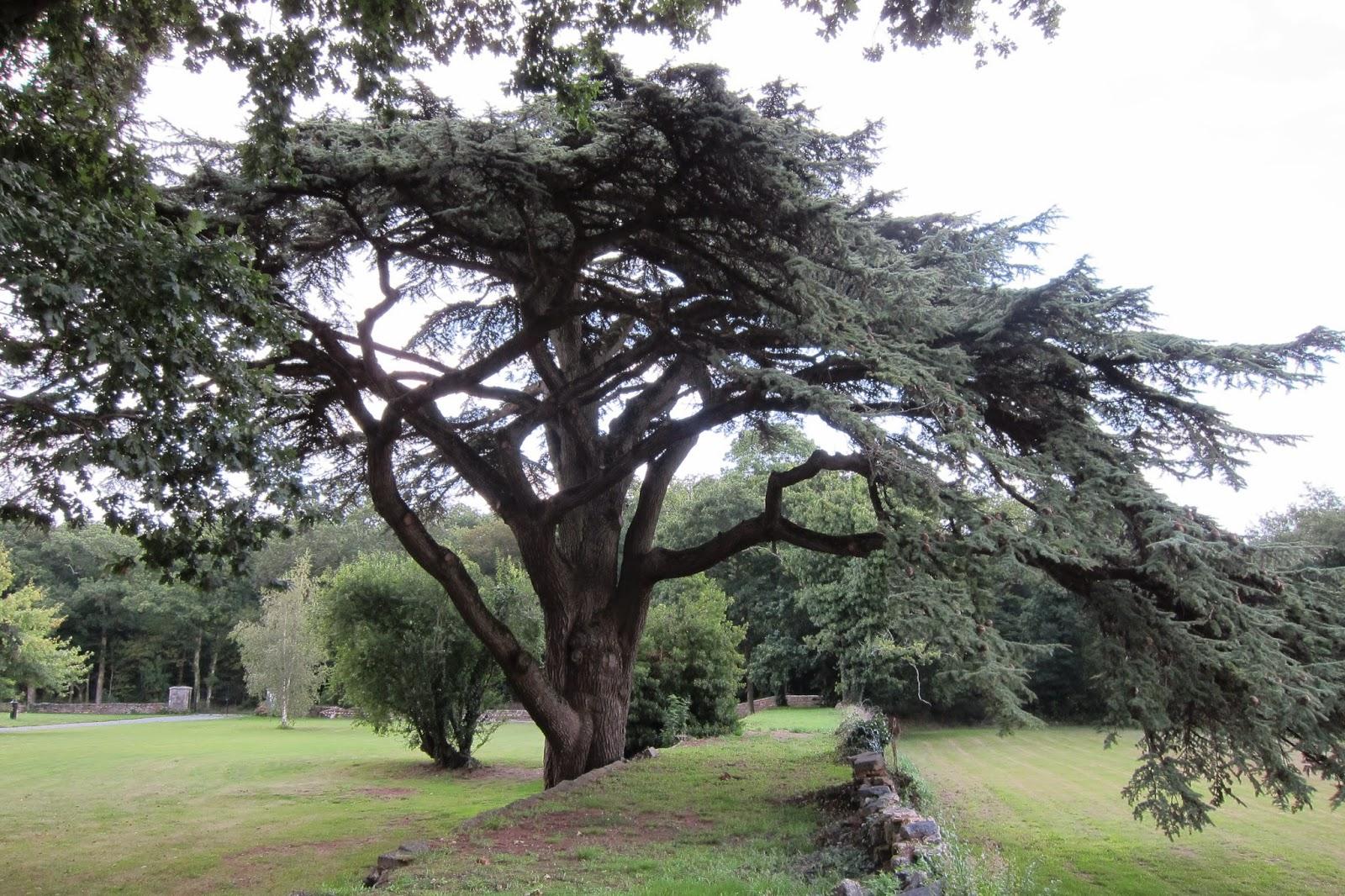 grand arbre breton