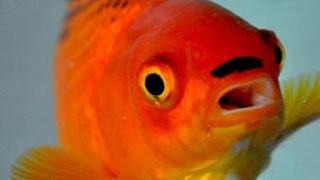 Mata Ikan Sebagai Pendeteksi Kanker