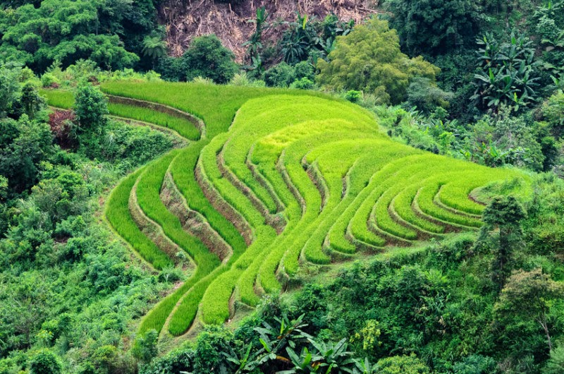 Hoang Su Phi terraced fields, Ha Giang province, Vietnam. (Credit: © hoangtran / Fotolia) Click to enlarge.