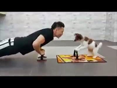 Even Doggie Wants To Workout!