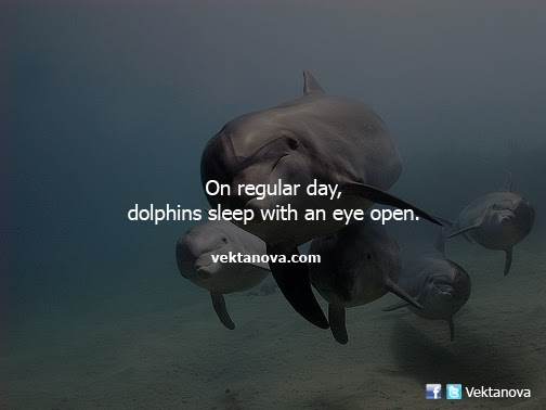 On Regular Day, Dolphins Sleep with an Eye Open
