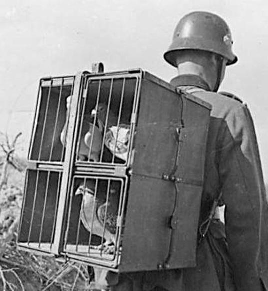 transporte militar de palomas mensajeras, foto