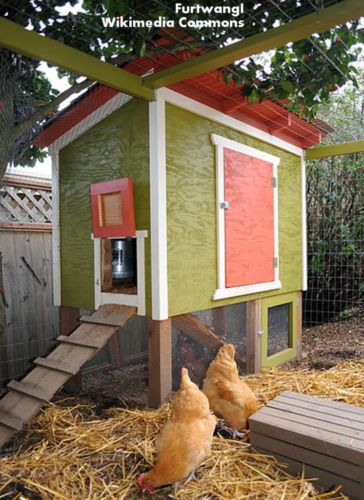 Roots 39 n 39 shoots the c files how to raise chickens for Fancy chicken coops