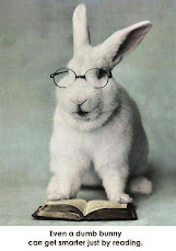 funny smart rabbit funny pics of anything