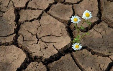 Palavra de Deus, água em terra seca!