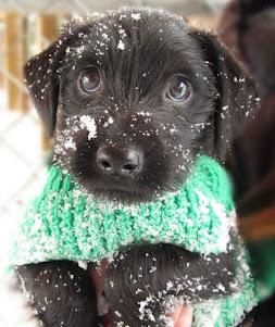 Hoy hace un poco de frío no?