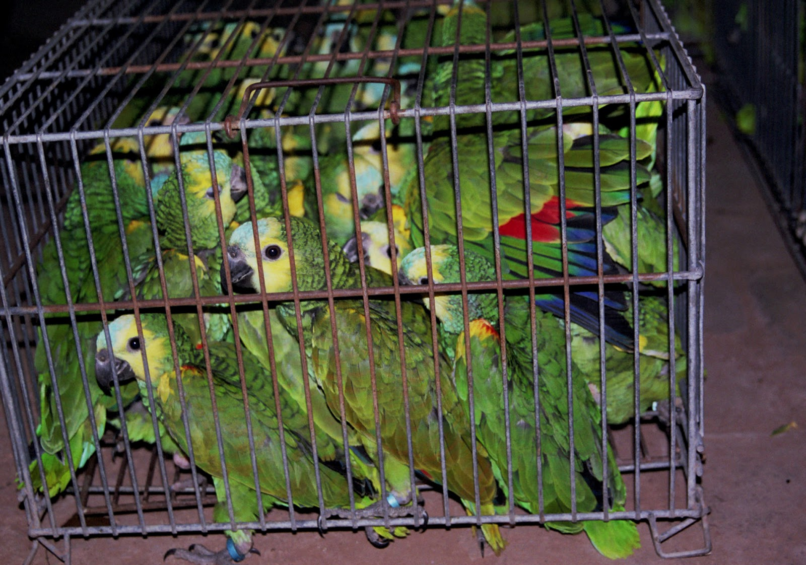 exotic pet trade Provides the framework for international regulation of the multi-million dollar per  annum exotic pet trade cites establishes a permit regime for the export, import, .
