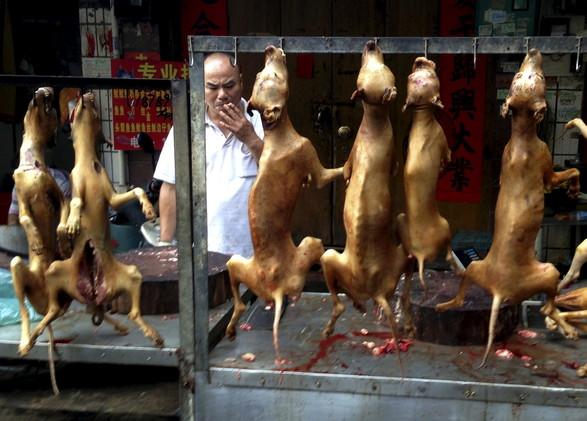 أكل لحم الكلاب في الصين