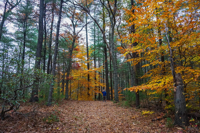 George Washington Forest- Hingham MA