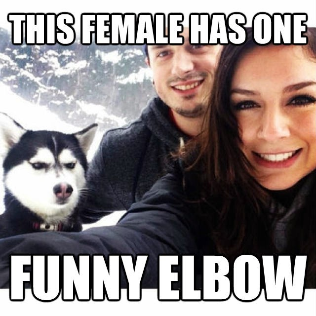 husky not happy being in the picture