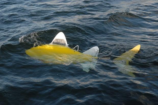 Peixe robô é desenvolvido para detectar poluição nos mares