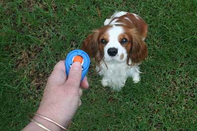 Dog Clicker Training Basics