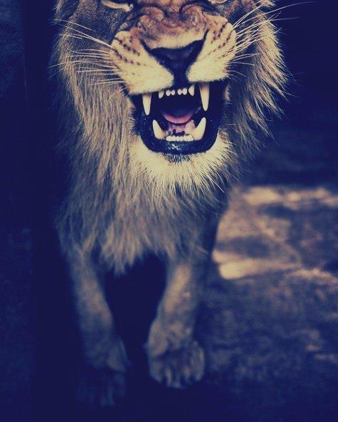 Foto de león
