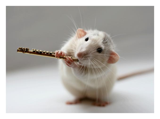 photograph of mouse playing an alternative flute