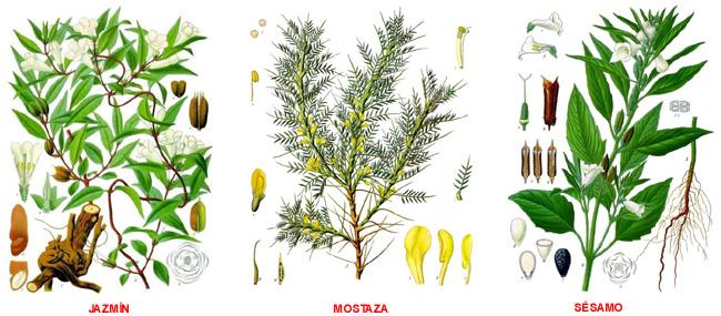 Plantas medicinales septiembre 2013 - Todo tipo de plantas con sus nombres ...