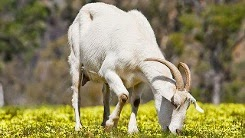 http://www.kxly.com/news/teen-killed-after-goat-falls-on-him-from-roof/29027882