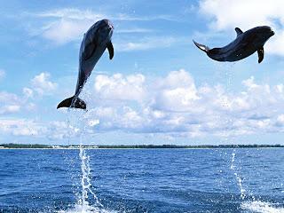 Delfines volando Fotografias de delfines