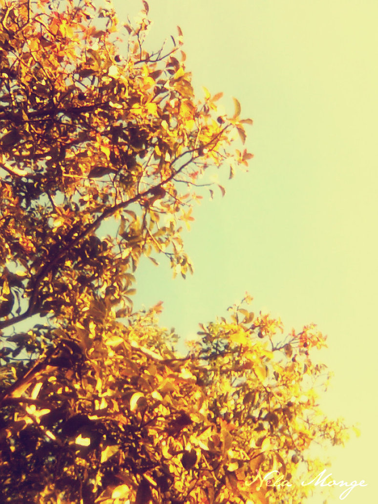 vintage fall backgrounds with - photo #10