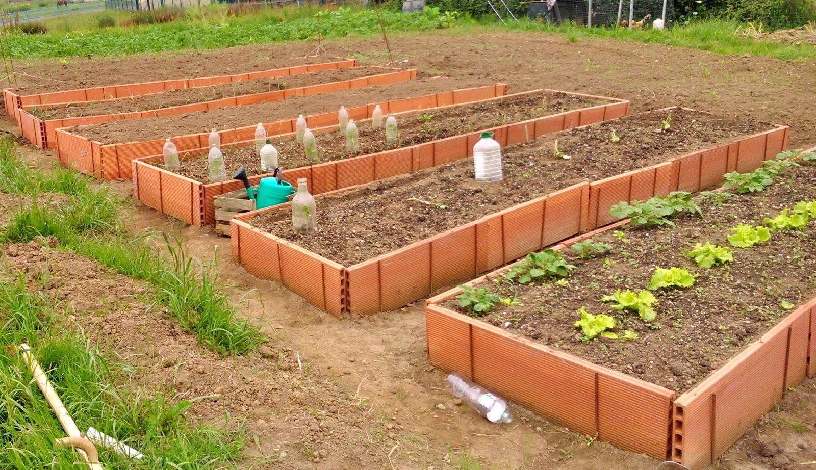 Lanes Asgaya Mi Huerto Ecol Gico ~ Como Hacer Una Huerta Ecologica