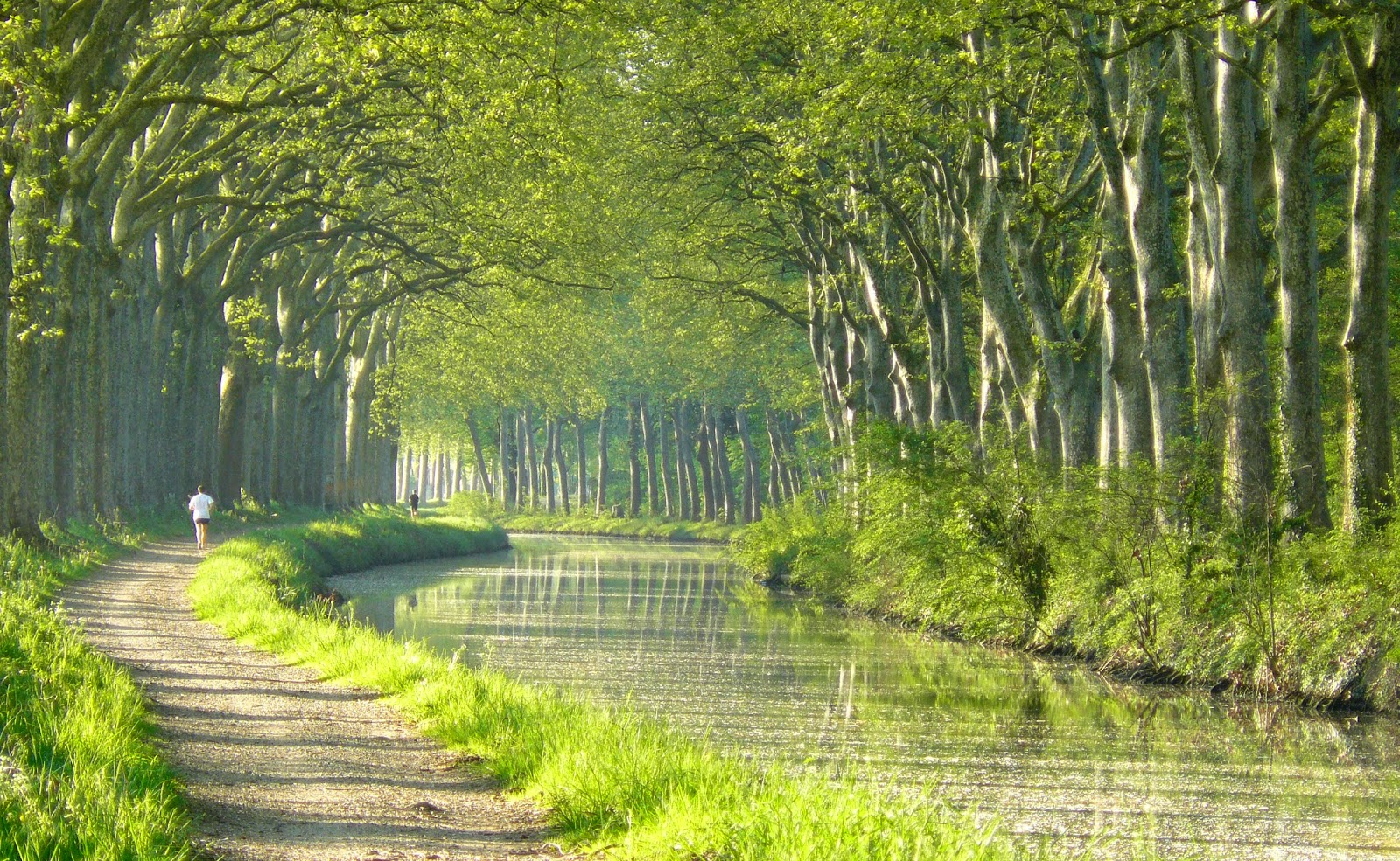 Der blog von france cotours platanensterben for Architecte canal du midi