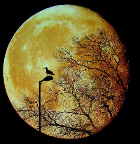 القمر ... كما لم ترآه من قبل .. رااائع  Stunning-photos-of-moon-05