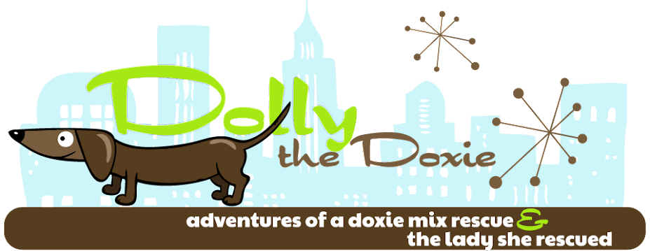 Dolly the Doxie