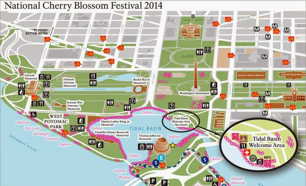 Map of the Tidal basin showing where to see the Cherry Blossoms in Washington DC