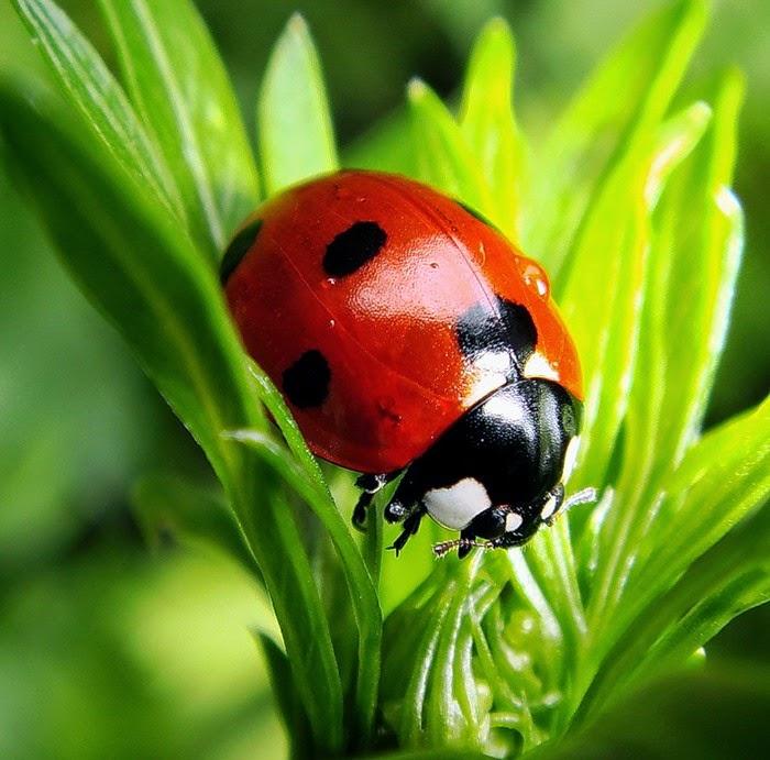 Summer. Ladybird