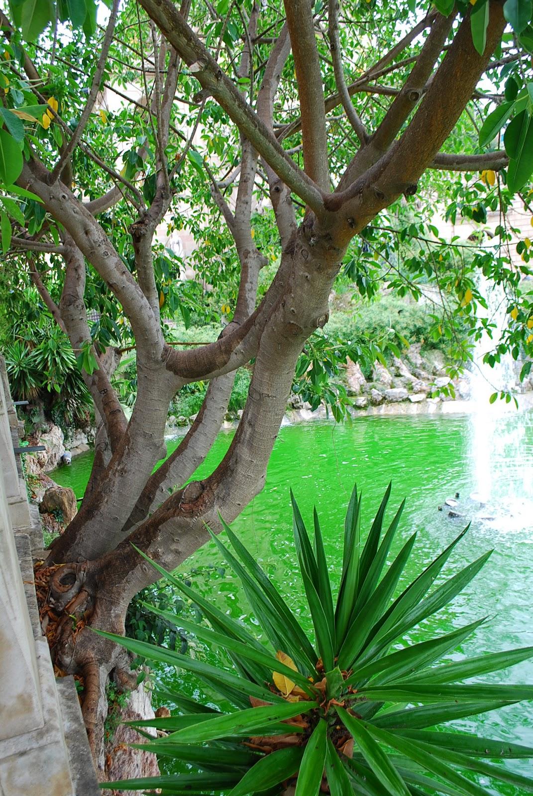 В Крыму сосны прорастают прямо со скал, а здесь фикусы из бетона:) Парк Цитадели (Сьютаделья, Ciutadella), Барселона, Каталония, Испания. Parc de la Ciutadella, Barcelona, Catalonia, Spain
