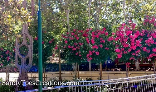 Famous #Circus #Trees at #GilroyGardens #save $20 #discounttickets