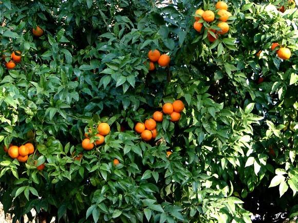 pivoines et macarons les fruits de noel les agrumes. Black Bedroom Furniture Sets. Home Design Ideas