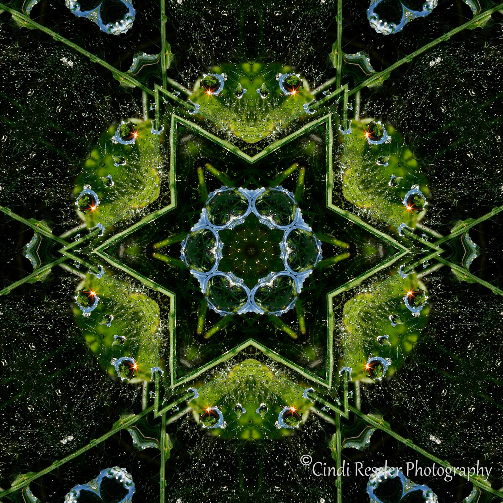 https://www.etsy.com/listing/217429002/frog-kaleidoscope-fine-art-photo-art?ref=shop_home_active_11