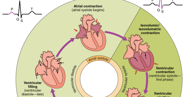 Mechanical Events Of The Cardiac Cycle