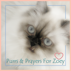 Purrs for Zoey