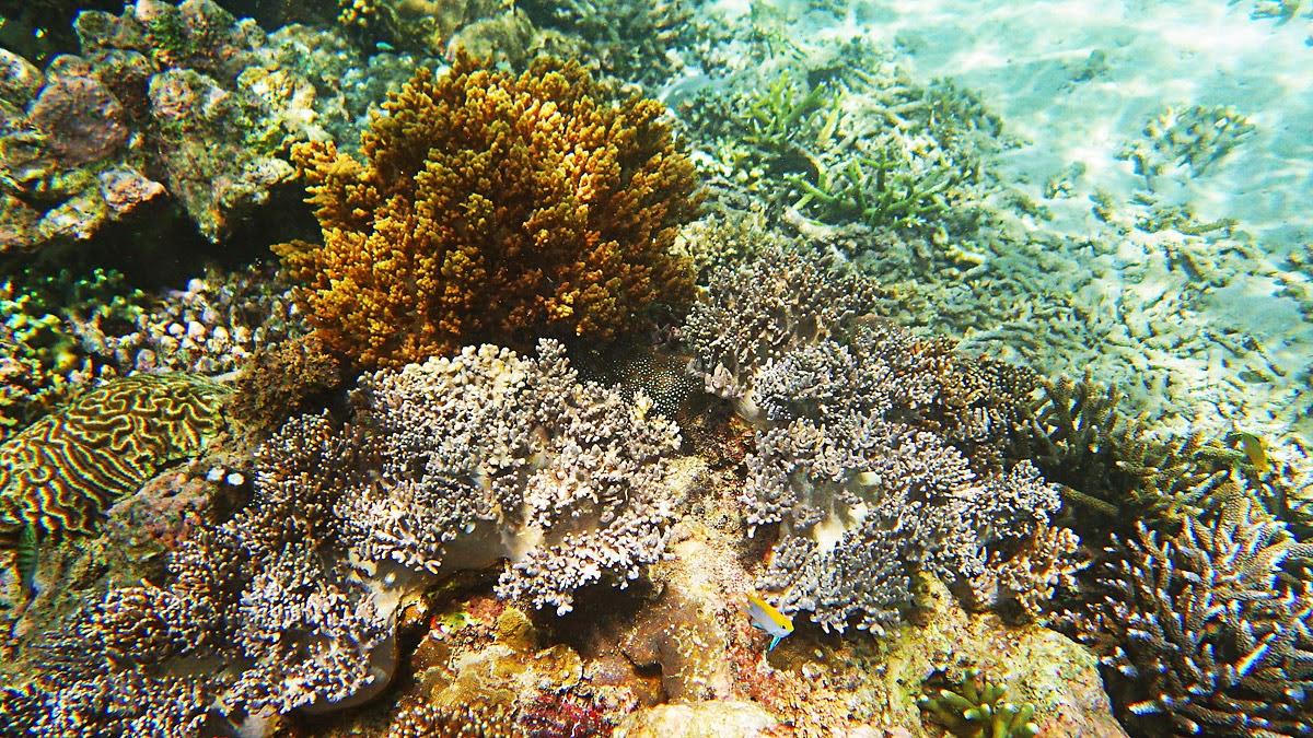 Underwater in Tenau sea