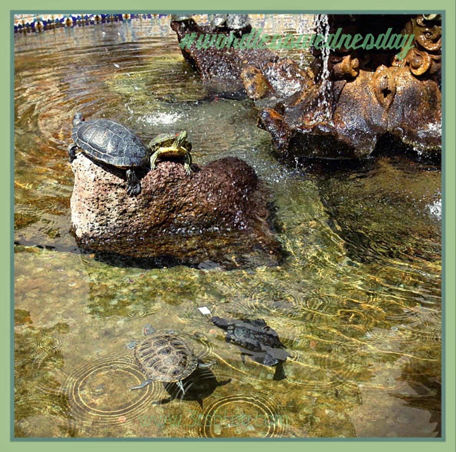 Turtles at La Arcada, Santa Barbara CA, March 2014