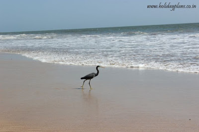 A bird spotted @ Madhavpur beach