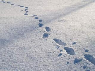 Dejar huellas en la nieve