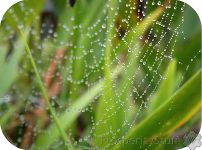 Raindrops & Spider Web