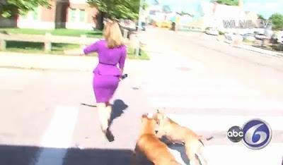 Mulher joga pedras e solta cães contra repórter