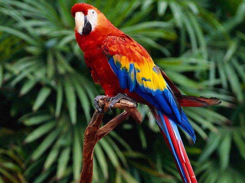 ADW: Aves: INFORMATION - Animal Diversity Web