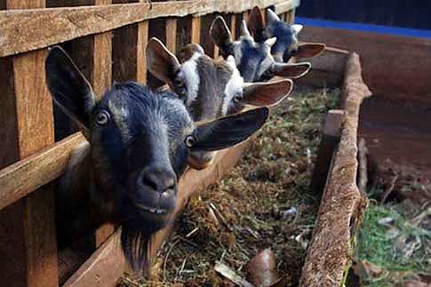 Kleintierhaltung im haus und garten blogvorstellung for Schafe halten im garten