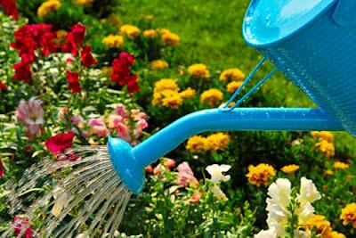 Как правильно поливать растения?