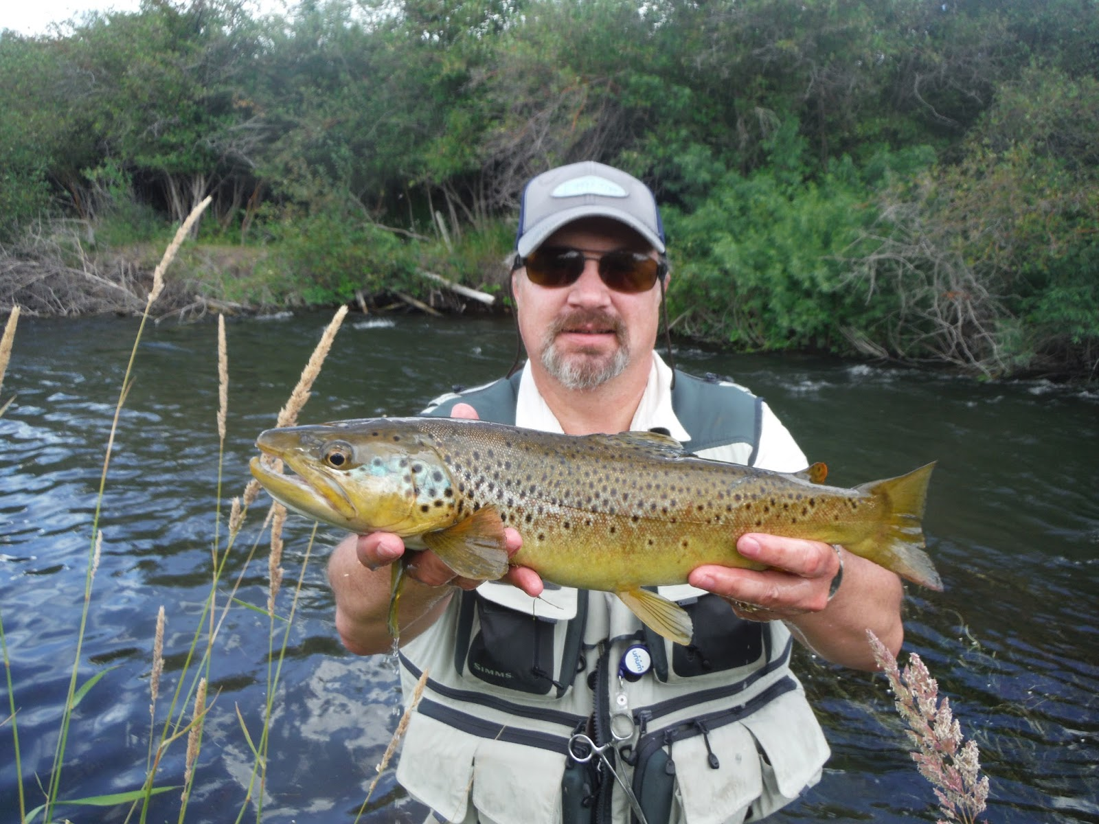 Fly fishing the west with howard caddis and pmd nymphs on for Weber river fishing