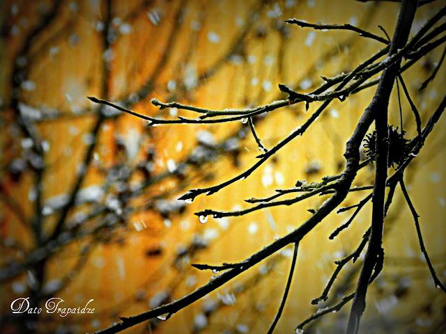 ბათუმური გაზაფხული. Батумская Весна