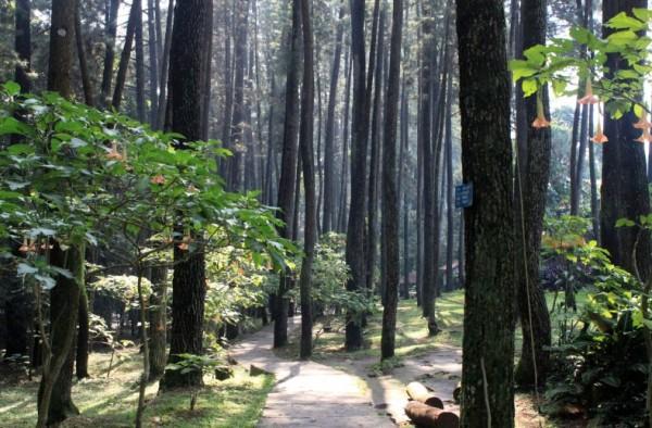 Wisata Alam Bandung Utara Taman Hutan Raya Djuanda