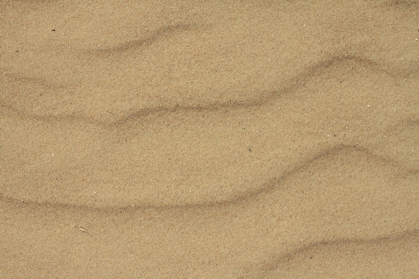 Sand Beach Soil Ground Shore Desert Texture Ver 1